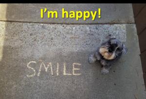 Empathic Dog Training