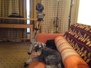 Klay Thompson Dog Training Shoot