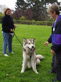 Dog Temperament Evaluation