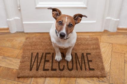 stop dog barking at door